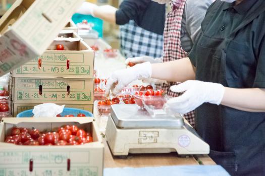 野菜・果物の袋詰め加工事業
